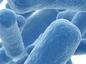 determinati probiotici cura l'IBS anche depressione