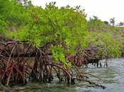 Gabon l'urbanizzazione massiccia uccide natura favorisce disastri ambientali