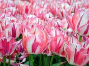meraviglie della primavera Parco Giardino Sigurtà