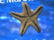 """Stelle Marine: Promo Romance """"The Studying Hours"""" Sara solo oggi (Hope Edizioni)"""