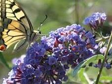 strage delle innocenti farfalle: suicidio frutto dilettantismo?