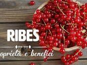 Ribes: proprietà, benefici controindicazioni