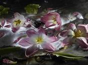 Mario Carrieri: fiori visioni