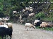 Malocchio bestiame rito della scacciabazue