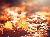 Passeggiando foglie d'autunno