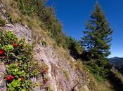 mirtilli rossi delle nostre montagne