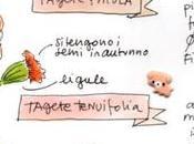 Scheda illustrata Tagete scaricare curiosità muertos