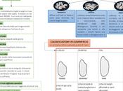riso: schema varietà, tipologie produzione