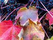Foglie morte, l'acqua, pietre l'odore dell'autunno