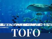 Mozambico, TOFO regno dello squalo balena