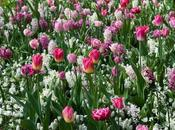 """ricette"" bulbi fioriti"