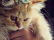gatti occupano angoli vuoti mondo umano. Quelli comodi.