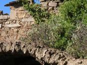 Biagio della Cima (IM): rustico Strada Vicinale Cresta
