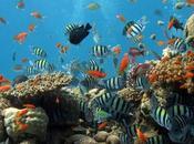 Acquariofilia: consigli comprare primo acquario