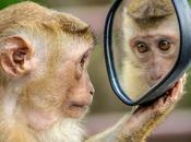 Usare specchio migliorarsi: nella terapia crescita personale