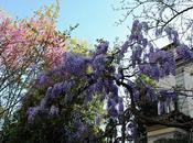 Firenze primavera: giardini fiore visitare