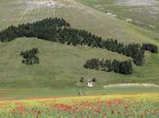 fioriture primavera Monti Sibillini