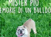 "presento ""Mister Memorie bulldog"""
