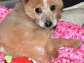 Ecco naki'o primo cane quattro zampe bioniche