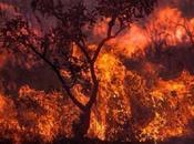 L'Amazzonia brucia: cosa succedendo realmente?