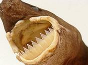 Confermato primo attacco squalo tagliatore