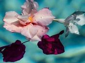 floating flower series #andreagracis...