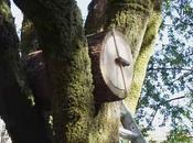 Arnia tradizionale tronco