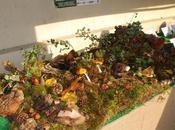 segreti funghi mostra sabato domenica ottobre Borgo medioevale Torino