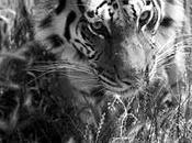 Animali tornano alla vita: RI-HABITAT Alessia Cerqua