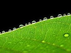 green cresce bene