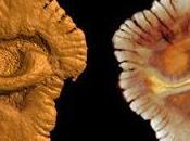 Vita multicellulare miliardi anni ecco prove