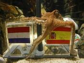 polpo paul ritira, niente pronostici octopus retires, more predictions