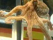 Spagna, 'paul' invitato alla sagra polpo spain, invited feast octopus