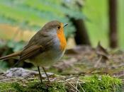 Lotta biologica, uccelli insettivori preziosi alleati nella difesa dell'orto giardino