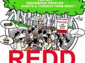 Deforestazione degrado forestale RDC: fallimento sistema REDD