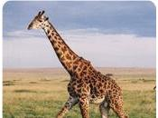 Mito: trasformazione della giraffa