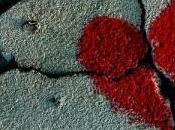 Droga satanismo hanno ucciso l'amore Melania Parolisi