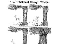 Disegno intelligente casualità stupida