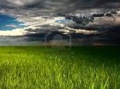 Finalmente giorno pioggia nostri giardini!!!