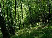 foreste artificiali combattere l'effetto serra