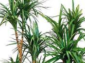 Pulizia cura delle piante d'appartamento