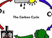 presento: ciclo carbonio!