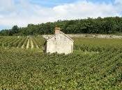 Wines 2012 Borgogna