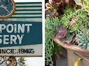 Dana Point Nursery