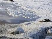Marea bianca lambisce Stintino. Nuovi agenti inquinanti