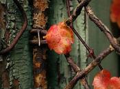 queste foglie