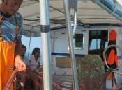 pesca bracconieri