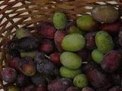 Olivotto, digestivo all'oliva