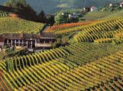Rencesione Dolcetto d'Alba: vino della concordia