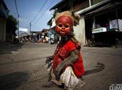 Ultime news Asia Scimmie Indonesia maltrattate usate come mascherine